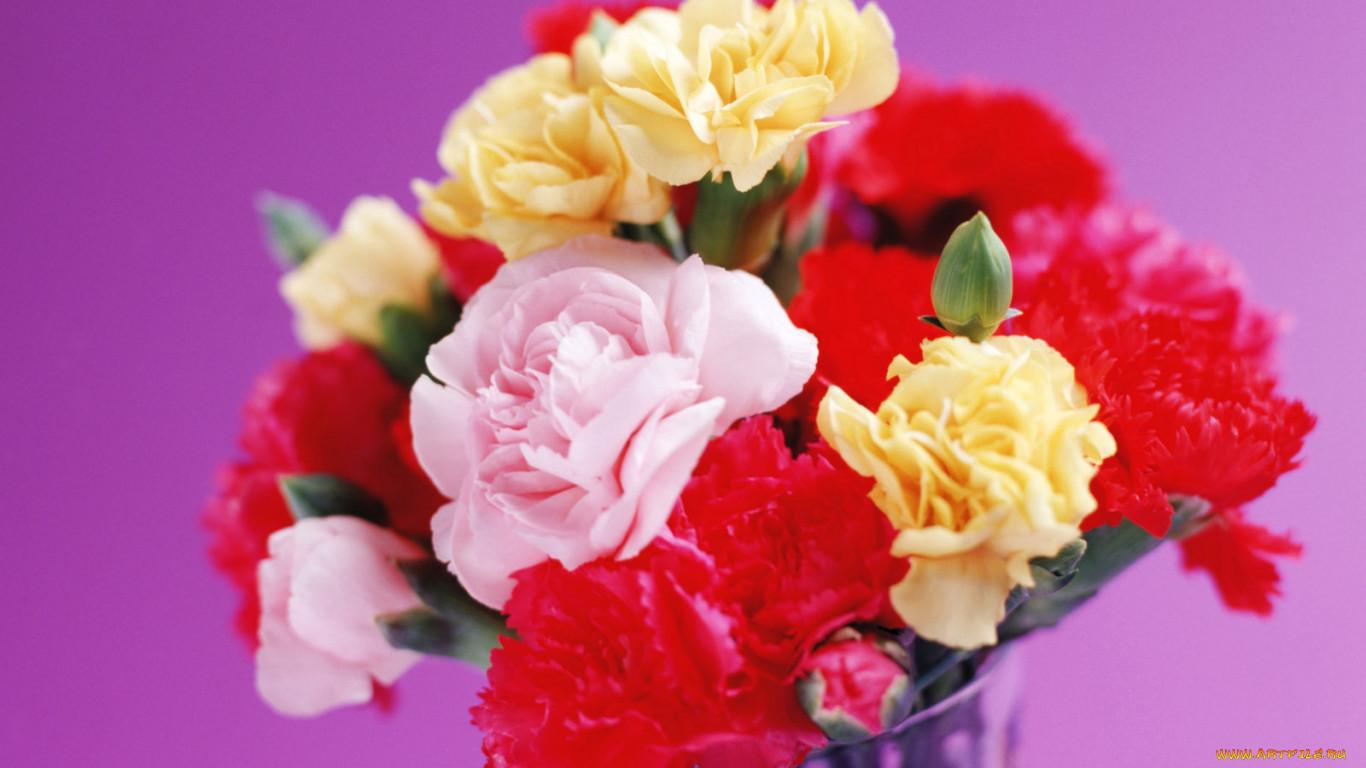 том, цветы для открыток гвоздики произошедшем напоминали